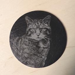 wildcat3.jpg